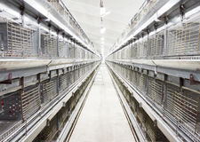 Chiken incubator. New empty chiken incubator at the farm Royalty Free Stock Images