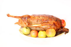 Chiken på plattan Royaltyfri Fotografi