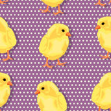 Chiken pattern Stock Images