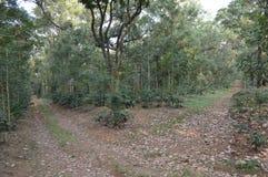 Chikmagalur, δάσος σταθμών λόφων σε Karnataka Στοκ φωτογραφία με δικαίωμα ελεύθερης χρήσης