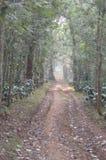 Chikmagalur, foresta della stazione della collina nel Karnataka Immagine Stock