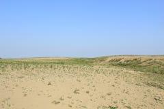 Chikpea en las dunas Imagen de archivo libre de regalías