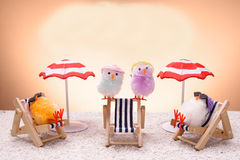 Chiks am Feiertag lizenzfreies stockfoto
