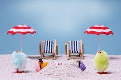 Chiks am Feiertag lizenzfreie stockfotos