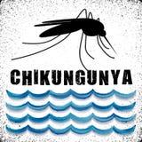 Chikungunya, mosquito, agua derecha Foto de archivo libre de regalías