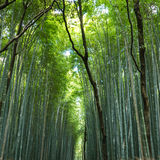 Chikurin-aucun-Michi : Chemin de bambou dans Arashiyama images libres de droits
