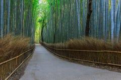 Chikurin-no-Michi at Arashiyama in Kyoto Stock Image