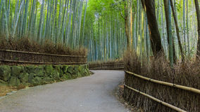 Chikurin-no-Michi at Arashiyama in Kyoto Royalty Free Stock Image