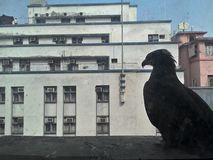 Chil vid fönstret Arkivbilder