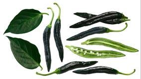 Chilacapeper van Pasillabajio, bladeren, wegen Royalty-vrije Stock Afbeelding