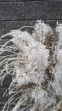 chilblained gräs royaltyfri fotografi