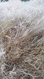 chilblained grass Royalty Free Stock Photos