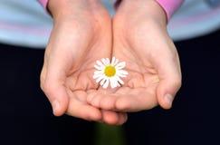 Child& x27; рука s с маргариткой Стоковая Фотография