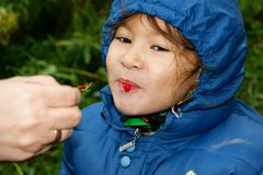 Child. Eats berry of the red currant Royalty Free Stock Photos