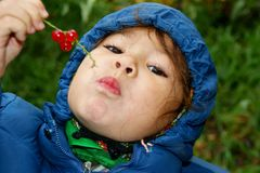 Child. Eats berry of the red currant Stock Photography