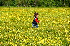 Child. Glad child runs on meadow with yellow dandelion Royalty Free Stock Image