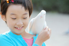 Child. Chinese little girl feeding pegion in the zoo Stock Photos