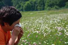 Child with an allergy to pollen while you blow your nose with a. White handkerchief Royalty Free Stock Photo