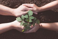 Free Child And Parent Hand Planting Young Tree On Black Soil Together Stock Photography - 105254722