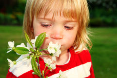 Child with apple blossom Royalty Free Stock Image
