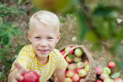 Child and apples in the garden. Boy and apples in the garden royalty free stock images