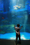 Child in aquarium. Child looking at aquarium fish Royalty Free Stock Photo