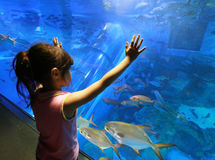Child in aquarium. Child looking at aquarium fish Royalty Free Stock Photos
