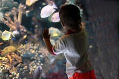 Child at aquarium Stock Images