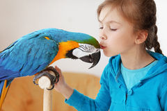 Child with ara parrot. Portrait of a kid girl with her domestic ara parrot Stock Photos