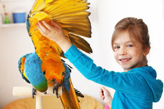 Child with ara parrot Royalty Free Stock Photo