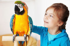 Child with ara parrot. Portrait of a kid girl with her domestic ara parrot Royalty Free Stock Photography