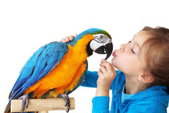 Child with ara parrot. Portrait of a kid girl with her domestic ara parrot Stock Photo