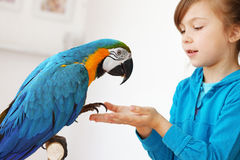 Child with ara parrot. Portrait of a kid girl with her domestic ara parrot Royalty Free Stock Photo
