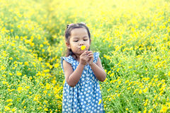 Child asian little girl blowing yellow flower in the garden Stock Photography