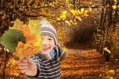 Child with Autumn leaves Stock Photography