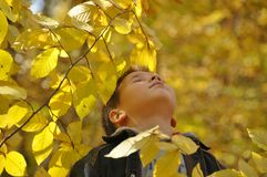 Child in the autumn leaves Royalty Free Stock Images