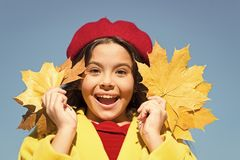 Child with autumn maple leaves walk. Autumn coziness is just around. Autumn warm season pleasant moments. Kid girl. Smiling face hold leaves sky background stock photo