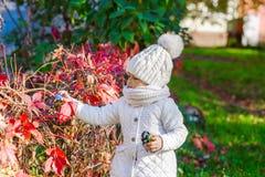 Child in autumn orange leaves. stock photos