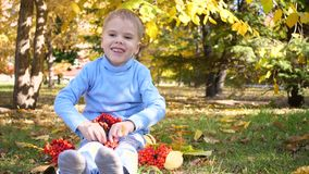 A child in the autumn Park plays and laughs merrily, he plays with yellow leaves and Rowan berries. Sunny autumn day in stock video footage