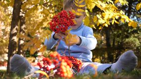 A child in the autumn Park plays and laughs merrily, he plays with yellow leaves and Rowan berries. Sunny autumn day in stock footage