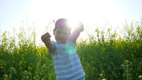 Child in backlight on meadow in grass, beautiful kid walking on field in sunshiny day, happy small guy playing on nature