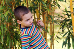 Child in bamboo garden or forest Stock Photos