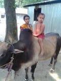 Child. Of bangladesh Royalty Free Stock Photos