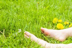 Child bare feet resting on a sunny green meadow with bright yell. Child bare feet resting on sunny green meadow with bright yellow dandelion flowers Royalty Free Stock Photo