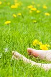 Child bare feet resting on a sunny green meadow with bright yell. Child bare feet resting on sunny green meadow with bright yellow dandelion flowers Stock Image