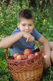 A child with a basket of apples Stock Images