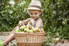 A child and a basket of apples Royalty Free Stock Photography