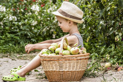 A child and a basket of apples Stock Photo