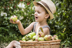 A child and a basket of apples Royalty Free Stock Images