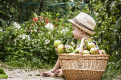 A child and a basket of apples Stock Image